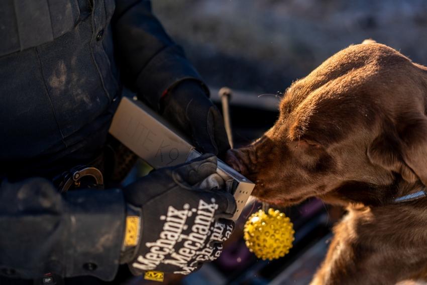 USA - La legalizzazione della marijuana mette a rischio il lavoro di molti cani antidroga