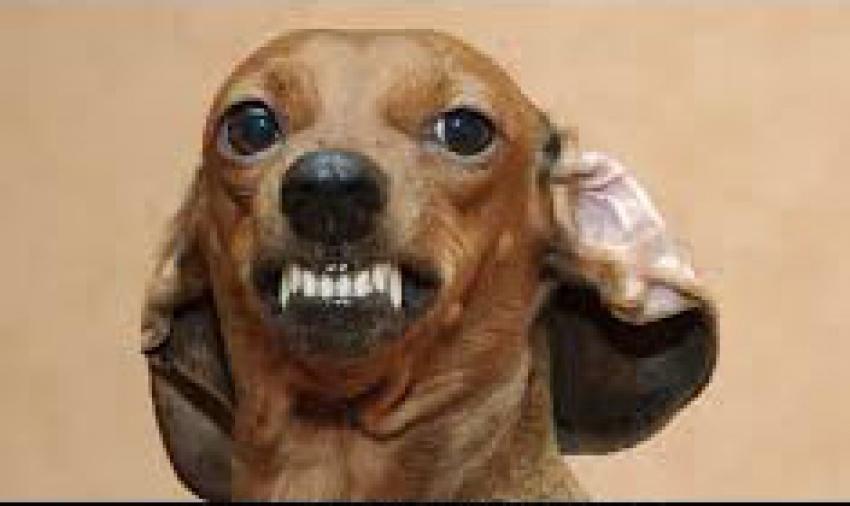 Milano: patentino per cani e divieto, con deroghe, del collare a scorrimento. I punti poco chiari