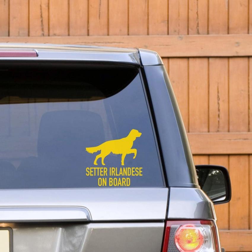 Trasporto dei cani da caccia in auto: cosa dice la legge