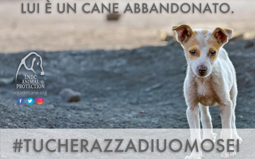 La Lega Nazionale per la Difesa del cane lancia l'hastag #Tucherazzadiuomosei