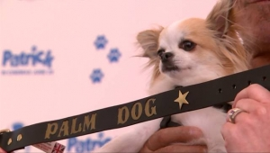 Cannes: Palm Dog, premiato l'intero cast canino di Dogman