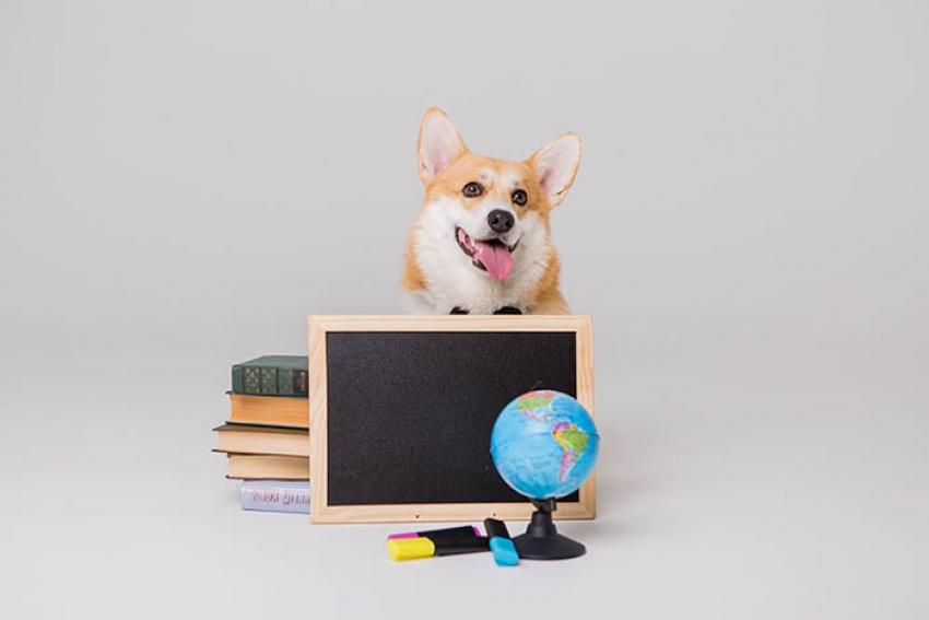 Il cane, la scuola e gli effetti sui bambini