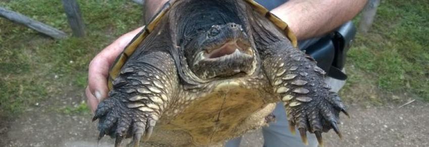 Cucciolo di cane (vivo) dato in pasto alla tartaruga. Insegnante sotto inchiesta