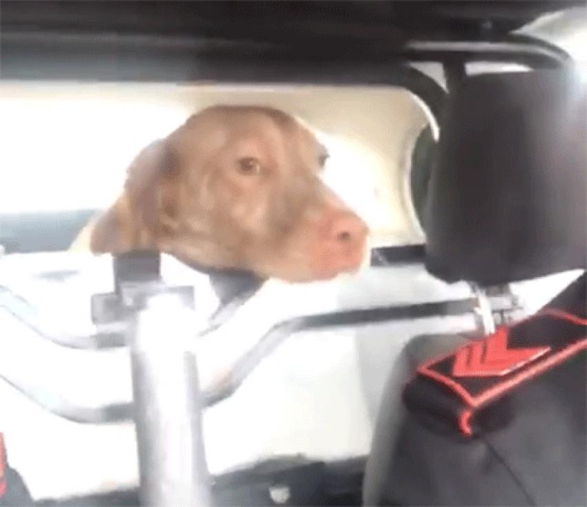 """I carabinieri """"arrestano"""" il cane spacciatore di crocchette. IL VIDEO"""