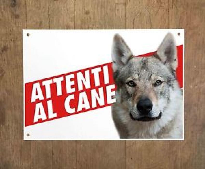 Allarme lupi in Trentino, ma sono cani lupo cecoslovacchi