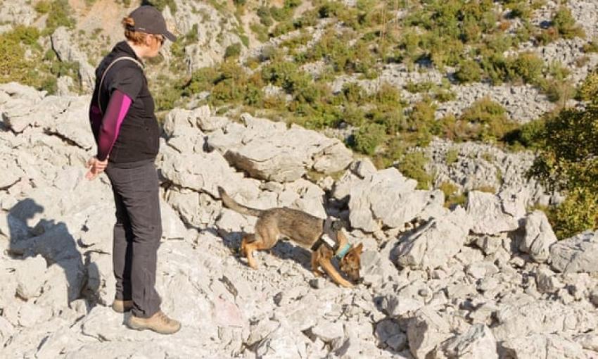 In Croazia i cani-archeologi scoprono tombe di tremila anni fa