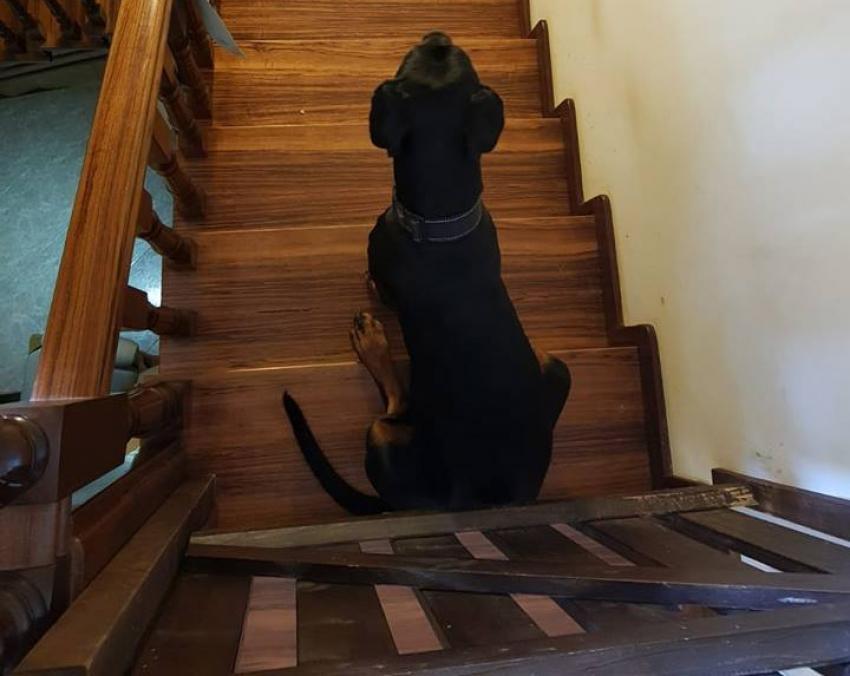 Vivere con un cucciolo di Dobermann: Come si fa ad abbandonare un cane?