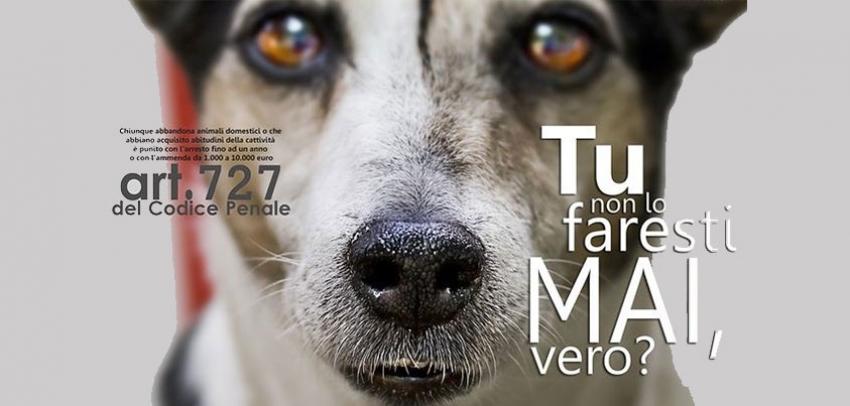 Articolo 727 del Codice Penale: maltrattamento e abbandono di animali