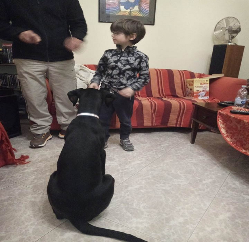 Vivere con un cucciolo di Dobermann: l'educatore cinofilo