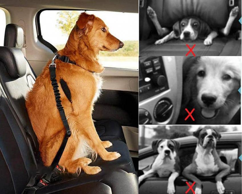 Cinture di sicurezza per cani - Cosa sapere prima dell'acquisto