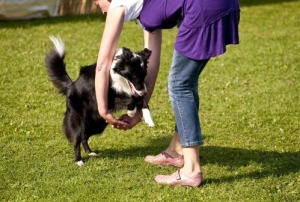 Sport Cinofili - Dog Dance: non serve essere ballerini