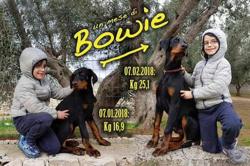 Vivere con un cucciolo di Dobermann: piccoli cuccioli crescono