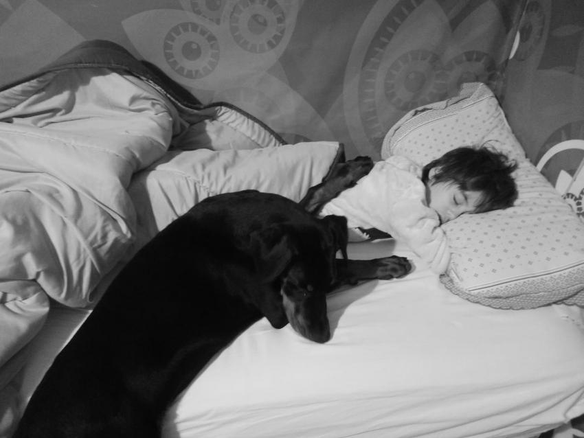 Vivere con un cucciolo di Dobermann: il branco brancolante