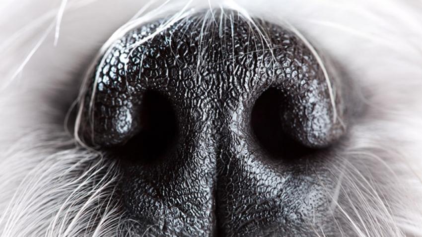 I baffi del cane: a cosa servono?