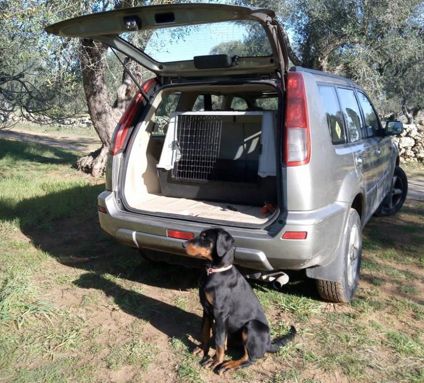 Vivere con un cucciolo di Dobermann: Selezione...