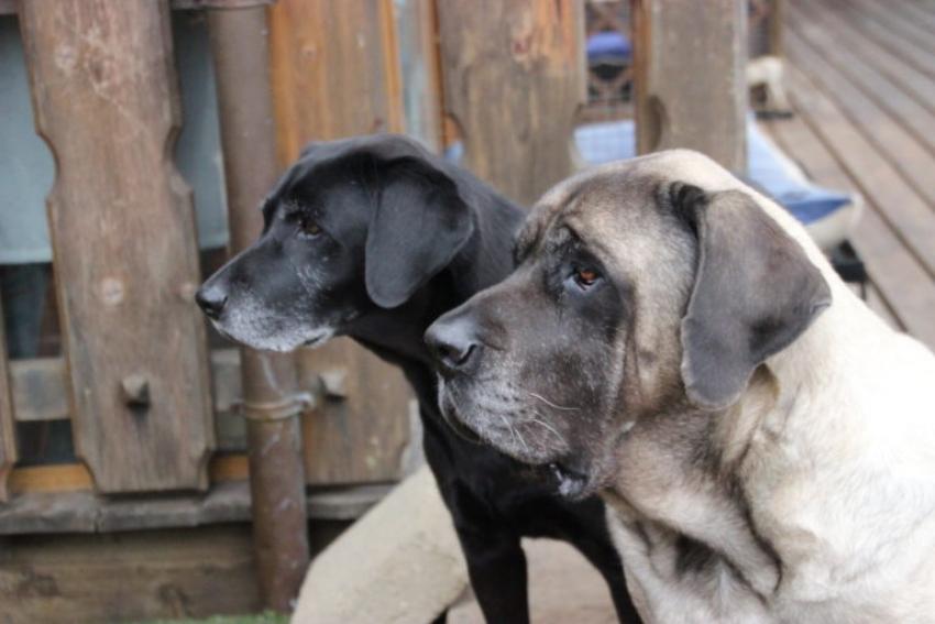 """Il primo """"ospizio"""" per cani in Italia si trova a Bracciano: Baffi d'argento"""