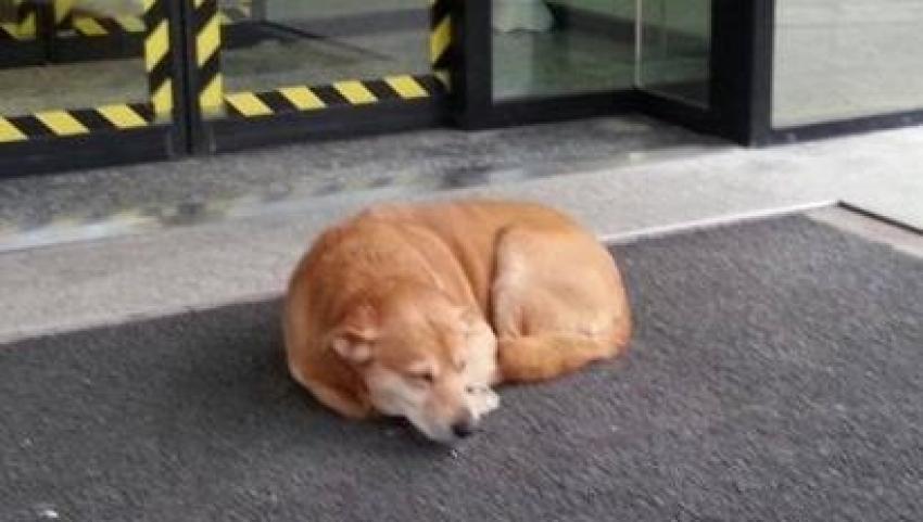 Ecco l'Hachiko di Tolmezzo: per giorni davanti l'ospedale in attesa del padrone
