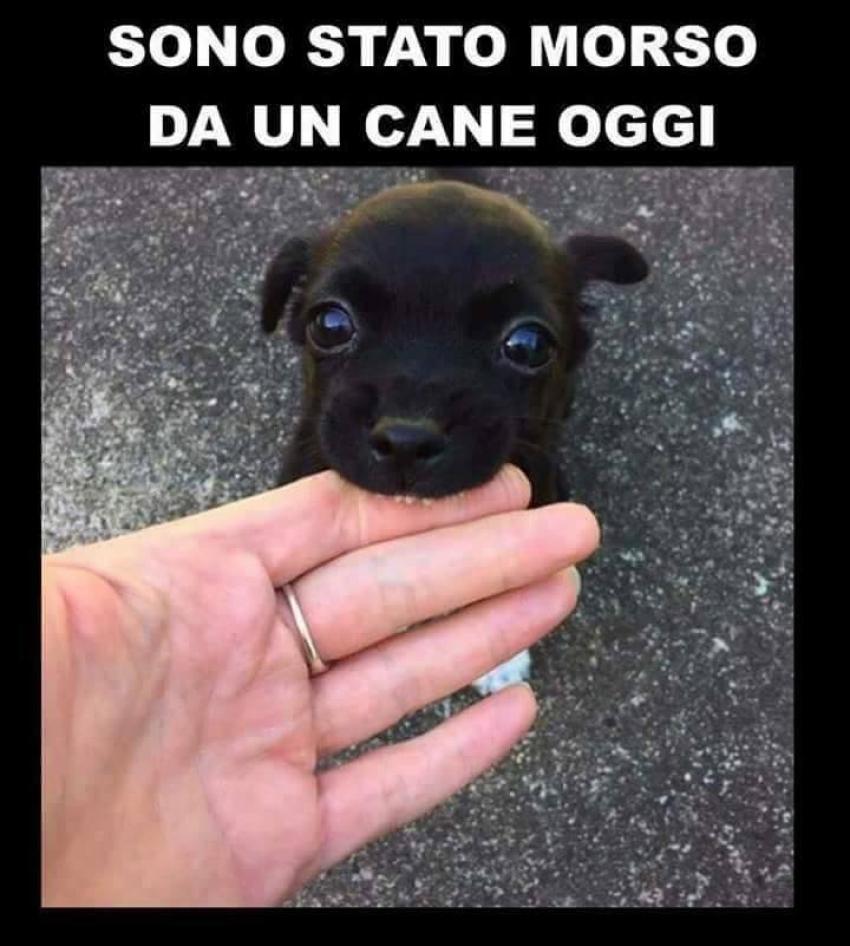 Prenota la tua consulenza gratuita per cani cuccioli e adulti!