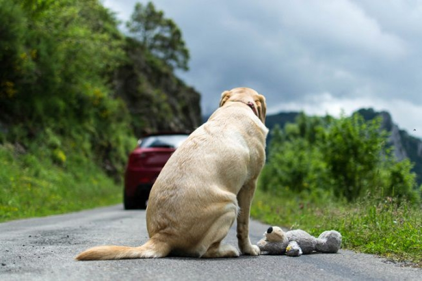 Campagna contro l'abbandono. I cani non ti abbandonano mai - IL VIDEO