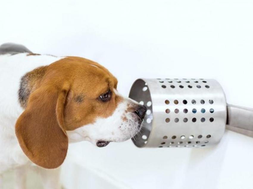 Cancro ai polmoni: il fiuto del cane come nuovo tipo di screening