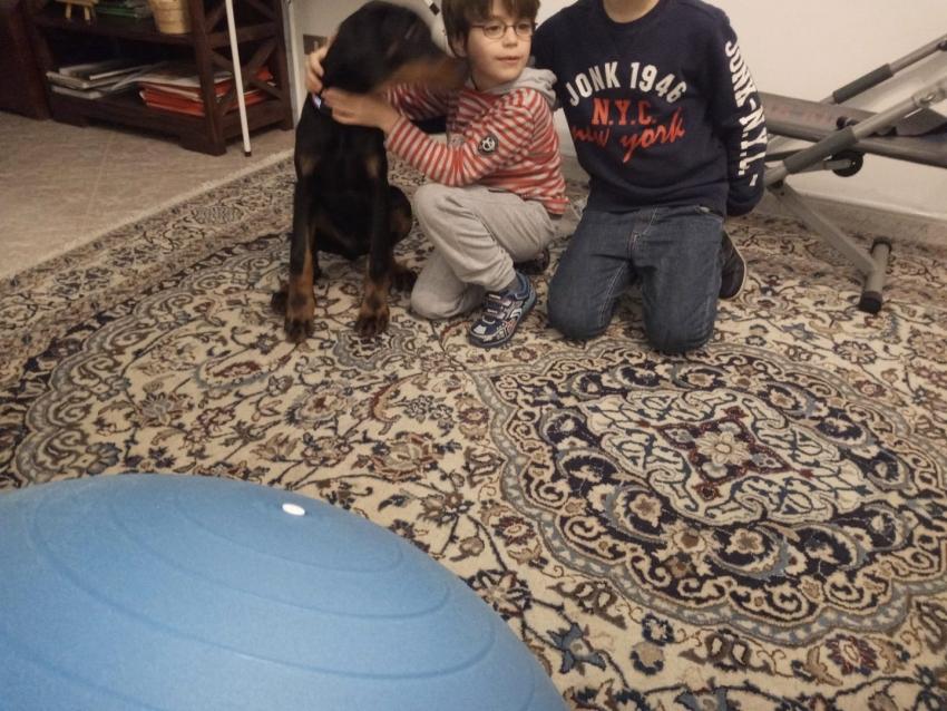Vivere con un cucciolo di Dobermann: socializzazione
