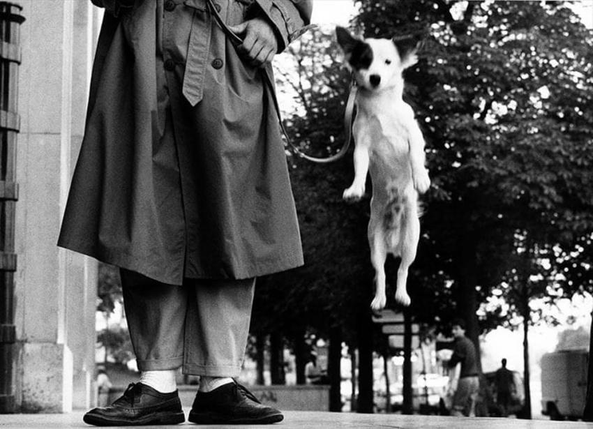 "Elliott Erwitt ed ""i suoi cani"" in mostra a Treviso dal 22 settembre"