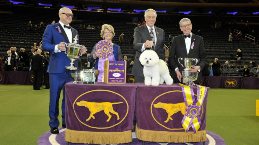 Westminster Kennel Club 2018: ecco i vincitori