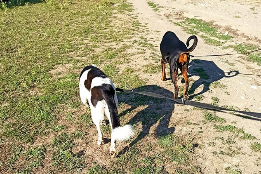 Perchè i cani scodinzolano? Cani felici che poi mordono!