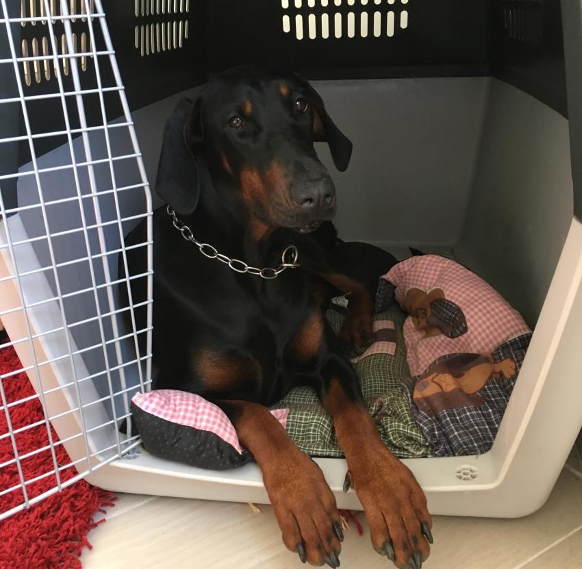 Trasportino o kennel per cani: come insegnare al cane ad entrarci
