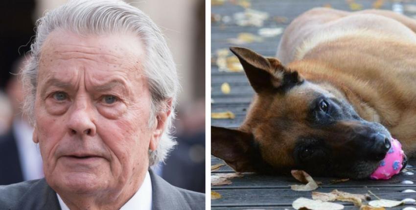 Alain Delon vorrebbe far morire il proprio cane insieme a lui: è subito polemica