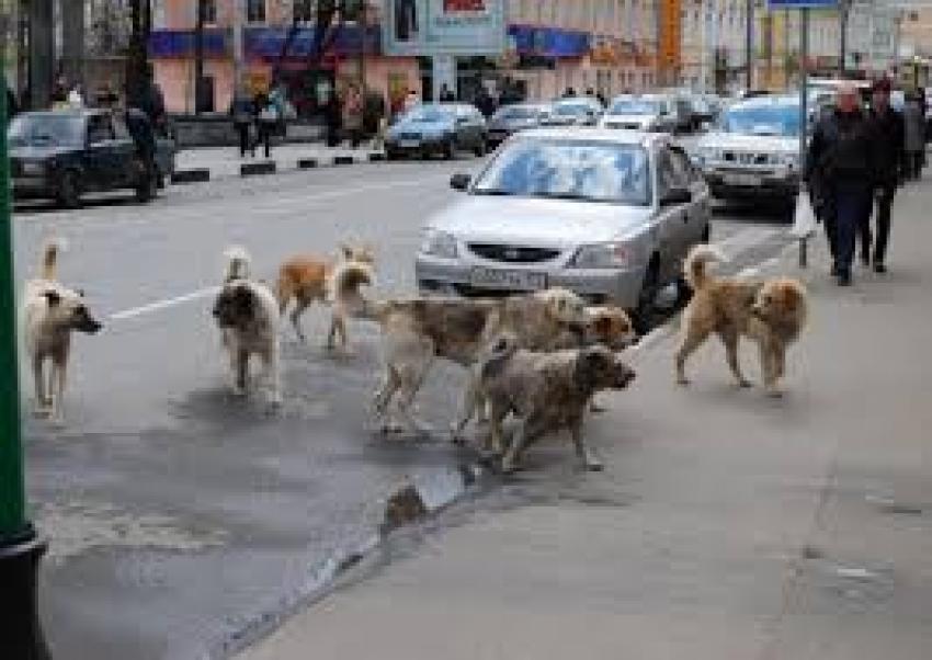 """Russia 2018: i Mondiali diventano il """"massacro dei cani"""""""