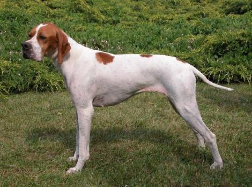 Appiombi del cane: cosa sono e come si definiscono