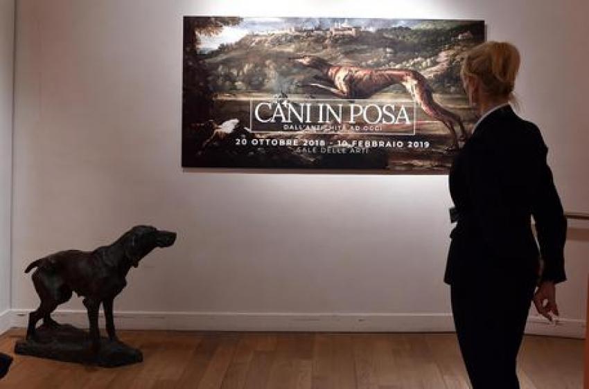 """Torino - Nella Reggia di Venaria, dal 20 ottobre, la mostra """"Cani in posa"""""""