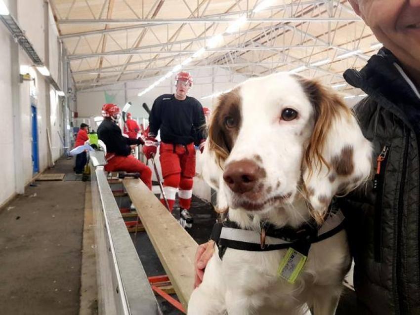Molly, il primo cane antidoping è svedese