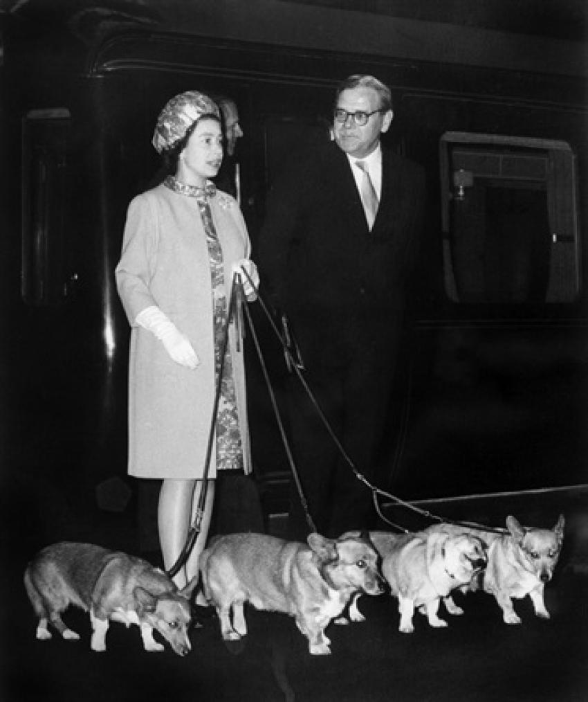 """Morto l'""""ultimo"""" cane corgi della regina Elisabetta. Con lui termina una dinastia storica"""