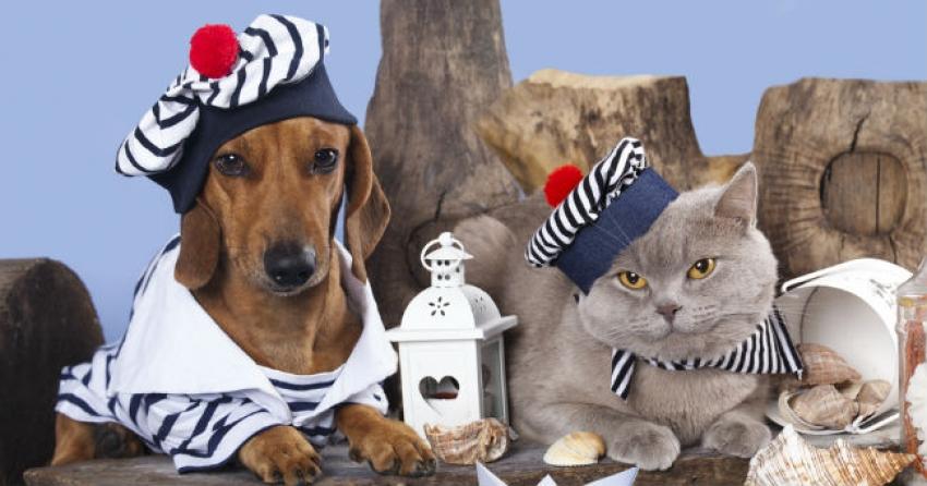 Viaggiare in nave con il cane ecco come for Animali domestici della cabina di nashville