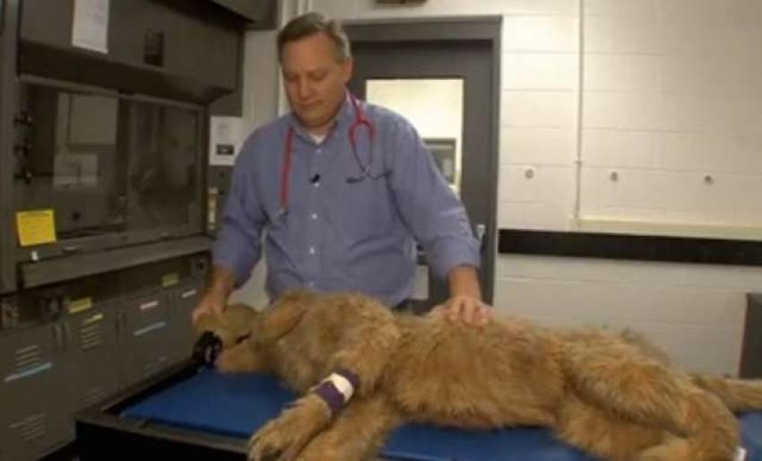 Il cane robot per giovani veterinari