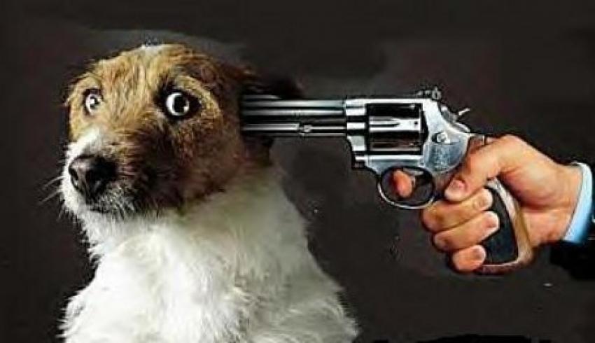 Lancia il cane dal balcone: condannato solamente per resistenza a pubblico ufficiale