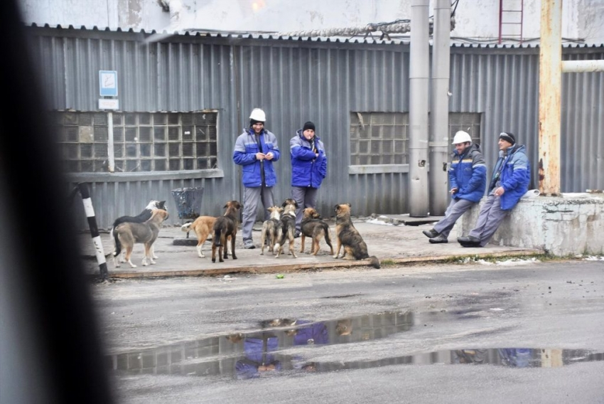 I cani di Chernobyl aiutati dalla Clean Futures Fund