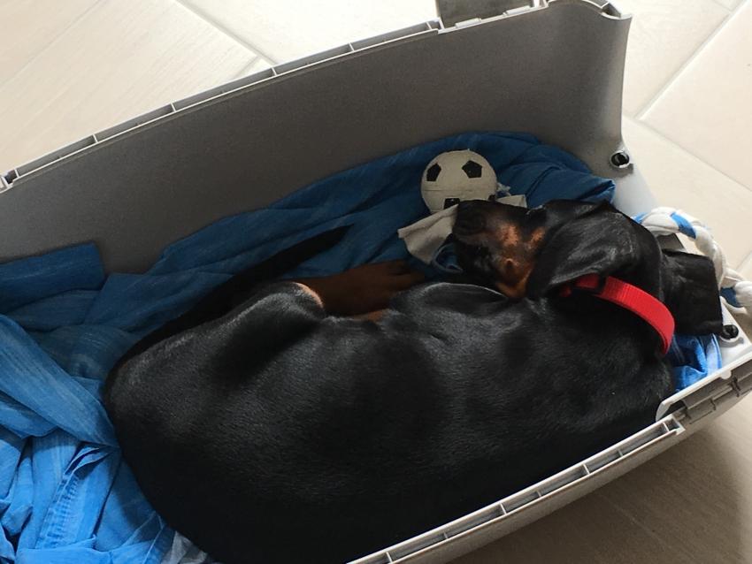 Cucciolo, la prima notte in casa. Cosa fare?