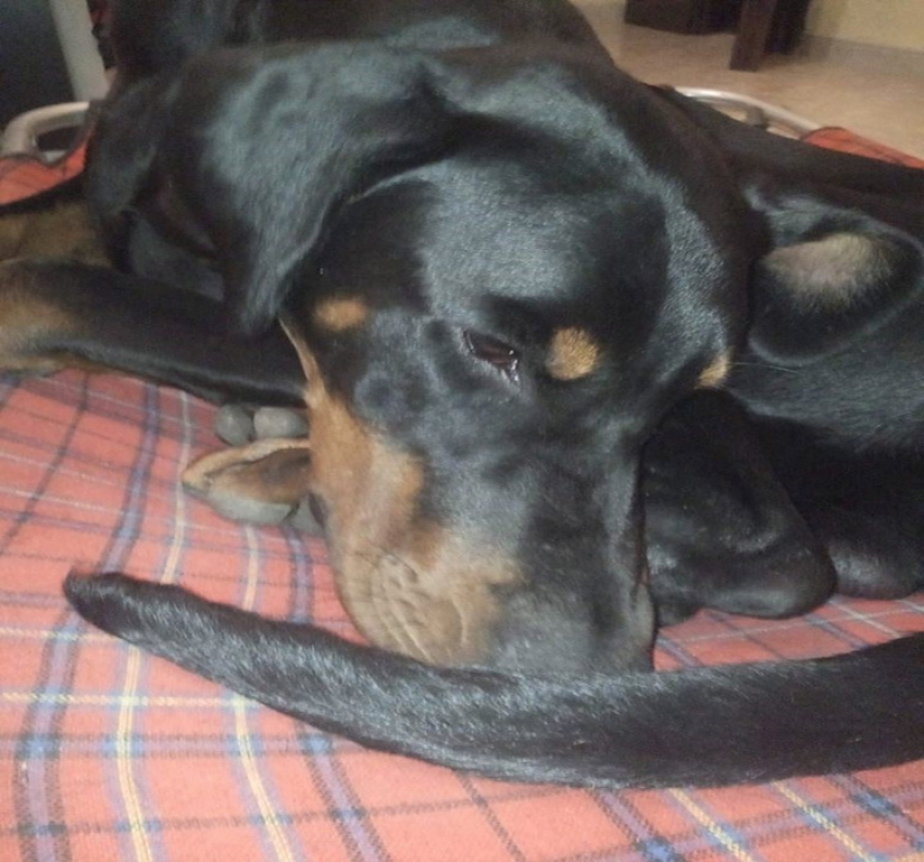 Vivere con un cucciolo di Dobermann: (In)Consapevolezze
