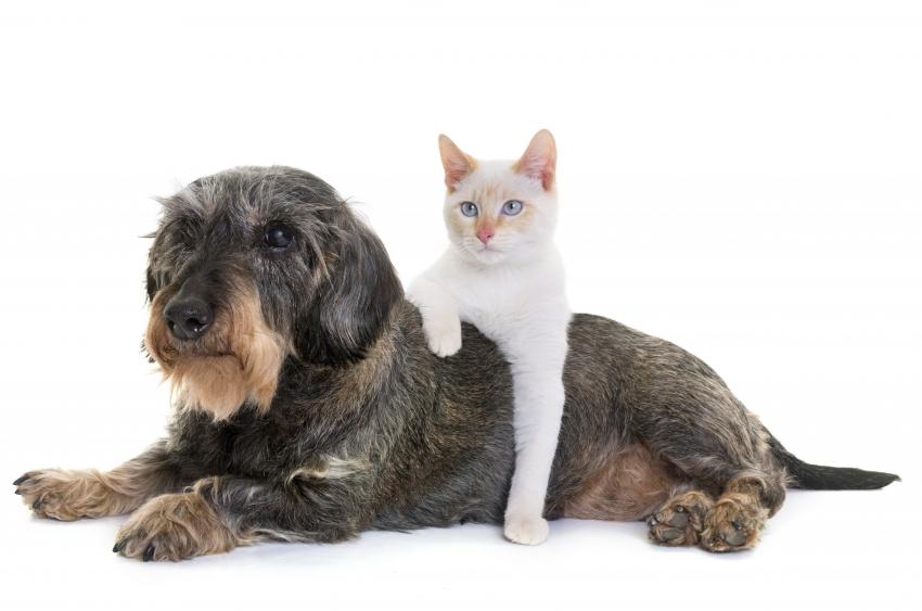 Trilussa - Er gatto e er cane