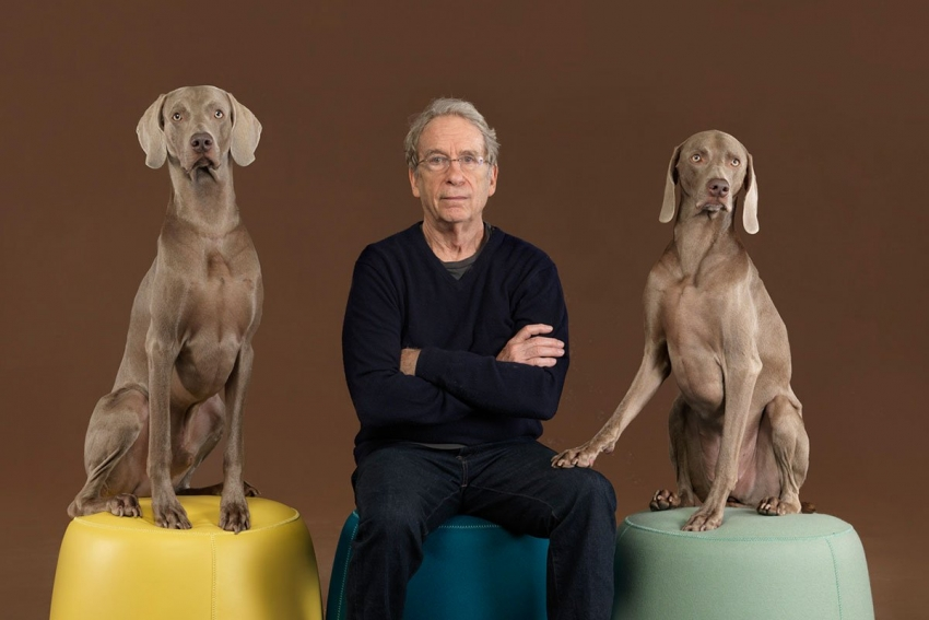 Lugano - William Wegman mostra i suoi Weimaraner