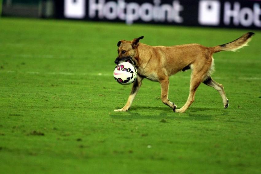 Il Leyton Orient cerca tifosi con cani, l'appello su Instagram