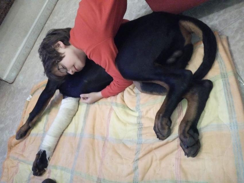 Vivere con un cucciolo di Dobermann: Incastri