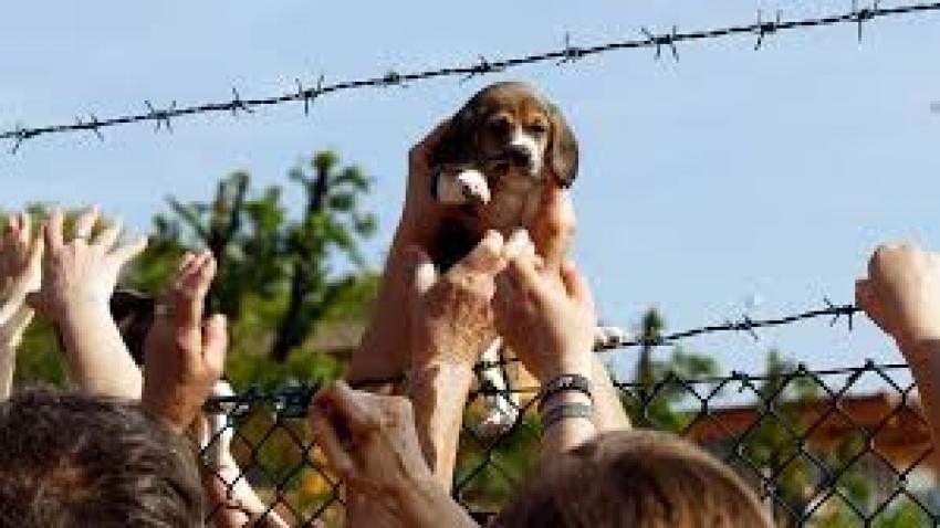Rubare cani non è reato
