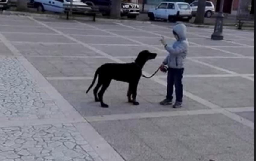 Vivere con un cucciolo di Dobermann: esercizi all'esterno!
