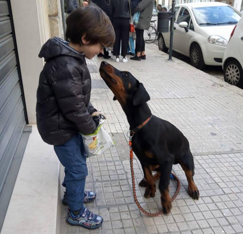 Vivere con un cucciolo di Dobermann: gioco di anticipo