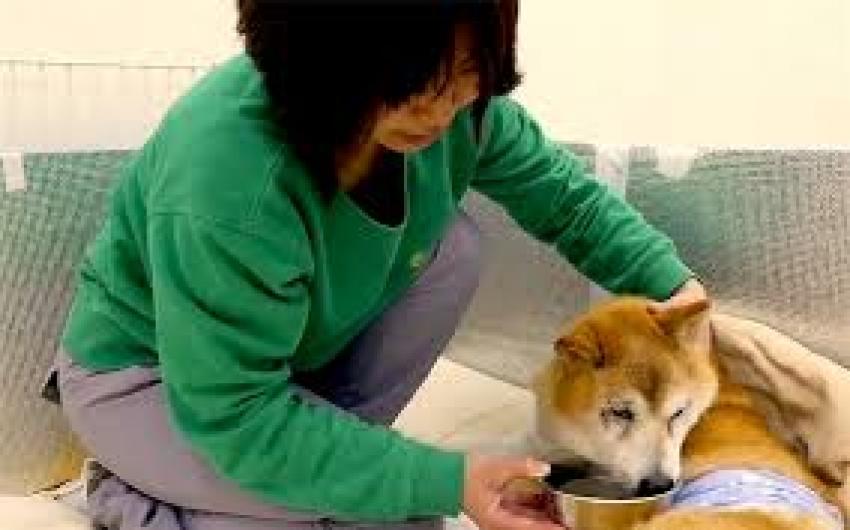 Giappone - Spopolano le beauty farm per cani