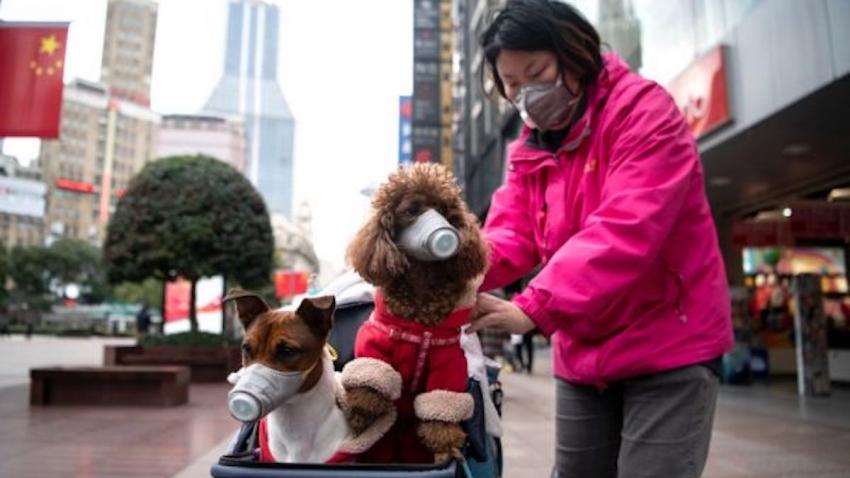 Gli animali da compagnia non diffondono la SARS-CoV-2